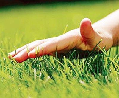 привести в порядок газон грядку или земельный участк